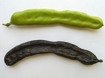 caroube-coupe-faim