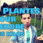 plantes-pour-perdre-du-poids
